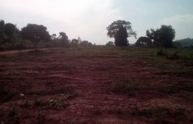 Plots for sale in Dundu at shs 20,000,000