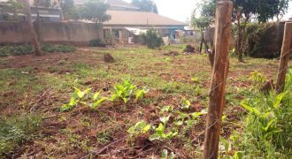 Plots for sale in Bububi Luweero district at shs 10,000,000