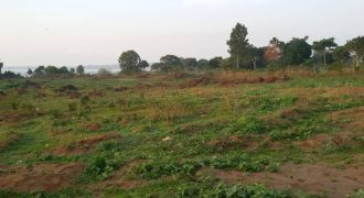 Plots for sale in Gayaza Kabubu at shs 36,000,000